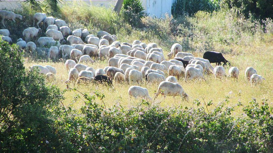 The Sheeps ... Urban Sheeps Sweet Sheeps Sheeps. Sheepsheep Sheeps Takingphotos Taking Photos Taking Photo