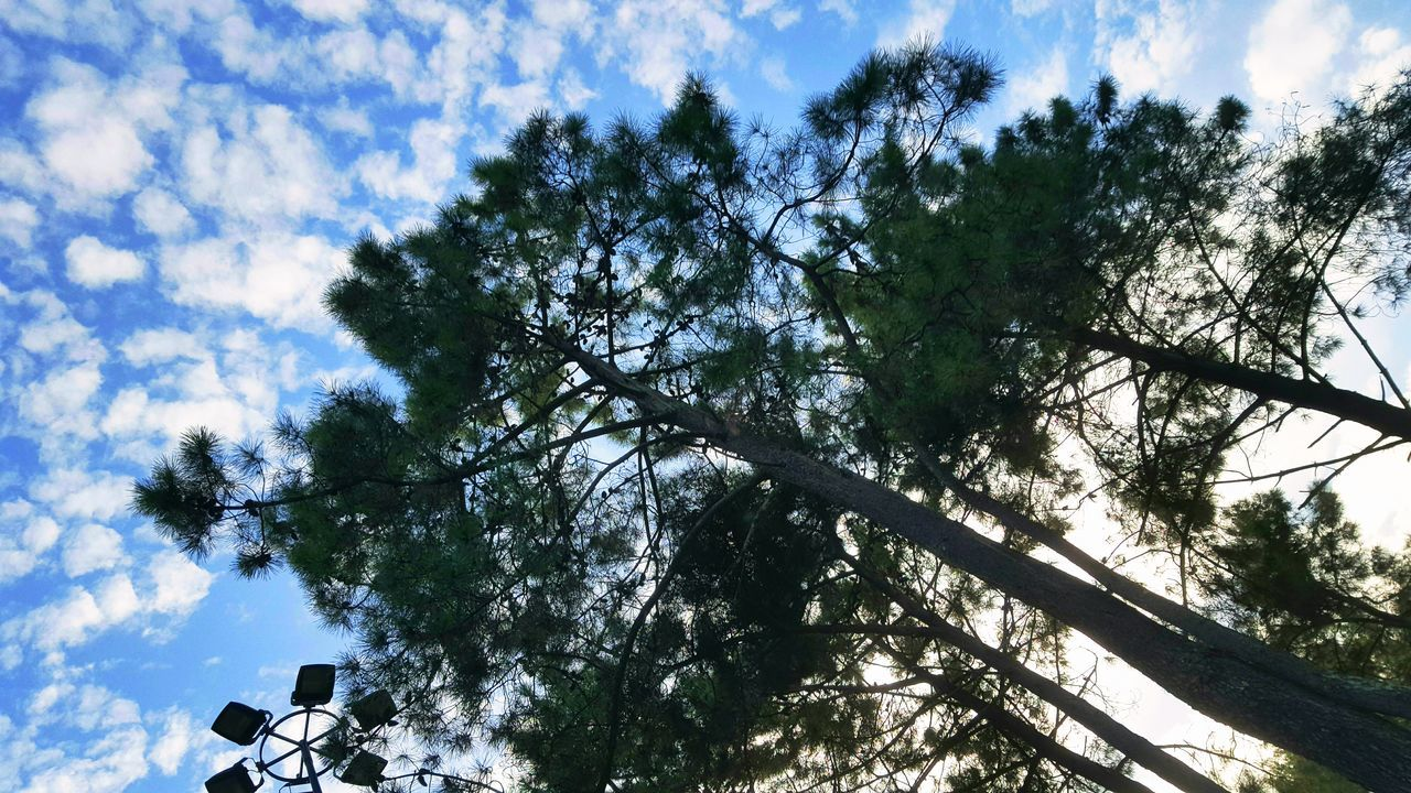 tree, low angle view, sky, nature, beauty in nature, day, growth, branch, cloud - sky, sunlight, no people, outdoors, tranquility, scenics