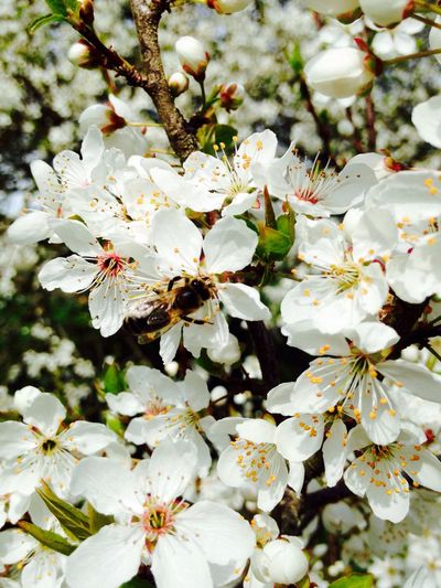 Spring Flowerpower Forager Bee EyeEmNewHere
