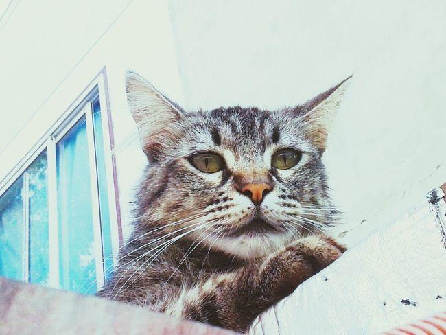Catoftheday Catlover Miau *-*