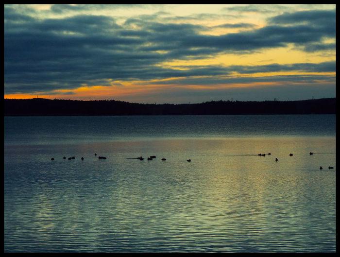 Bird flying over calm lake