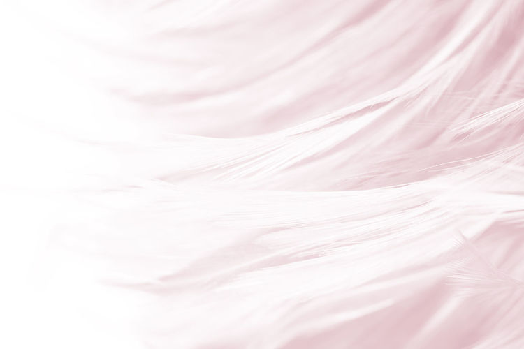 Backgrounds Full Frame Textured  Textile No People Abstract Pink Color Softness White Color Pattern Abstract Backgrounds Close-up Extreme Close-up Swirl Elégance Luxury Smooth Copy Space Indoors  Rippled Textured Effect Purple Blank