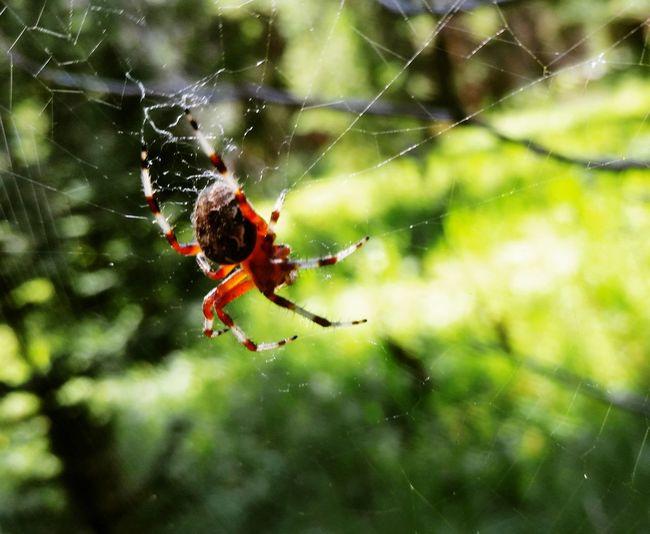 Spider Spiderweb Red Lodge, Montana Nature