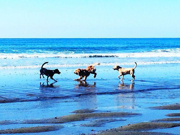Dogs Taking Photos Doggy Ocean Beachphotography Life Is A Beach Outdoors Beach Photography Dog Love On The Beach