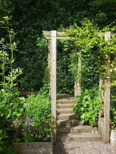 Outdoors Architecture Decoration Green Color Plants Portique Garden Nature Garden Architecture