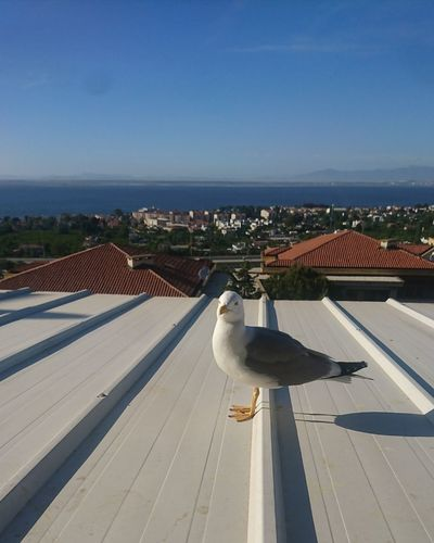 Seagull Politics And Government City Cityscape Water Urban Skyline Ice Hockey Aerial View High Angle View Business Finance And Industry Sky Roof Roof Tile
