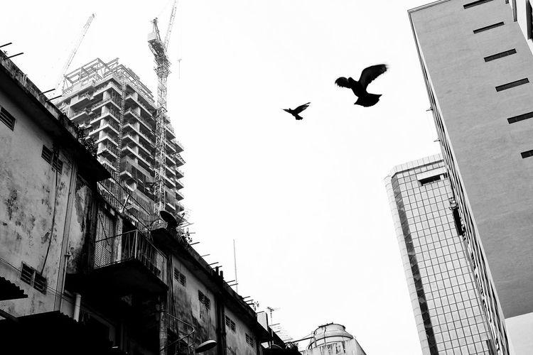 The Changing City Streetphotography Cityscapes Buildings Birdsflyinghigh Blackandwhite Monochrome Fujifilm X100t Kualalumpur