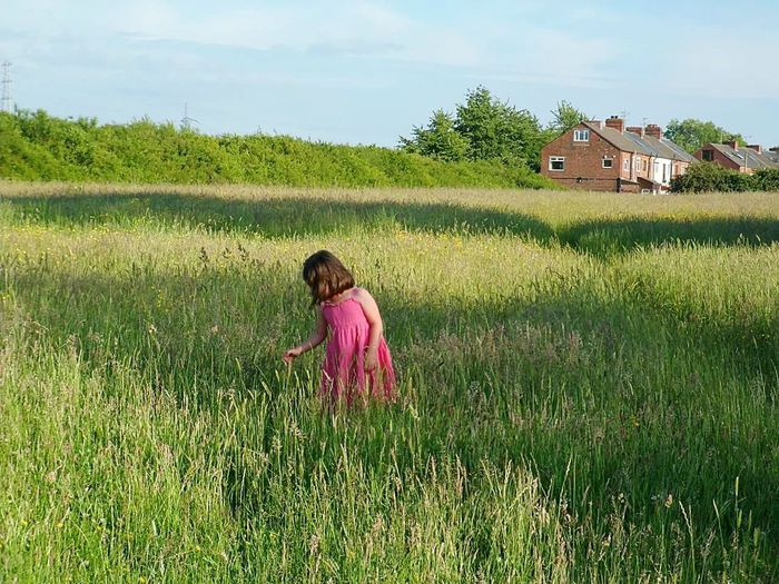 Field Agriculture Rural Scene One Person Outdoors Grass Girls Child Summer Beauty Onegirl One Girl Only Southyorkshire Pink Picking Flowers  Little Girl Pink Dress Summer Summertime Countryside