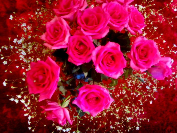 Abundance Backgrounds Beauty In Nature Bunch Of Flowers Flowers,Plants & Garden Freshness Growth Nature_collection No People Passion Red Redroses Roses As A Gift