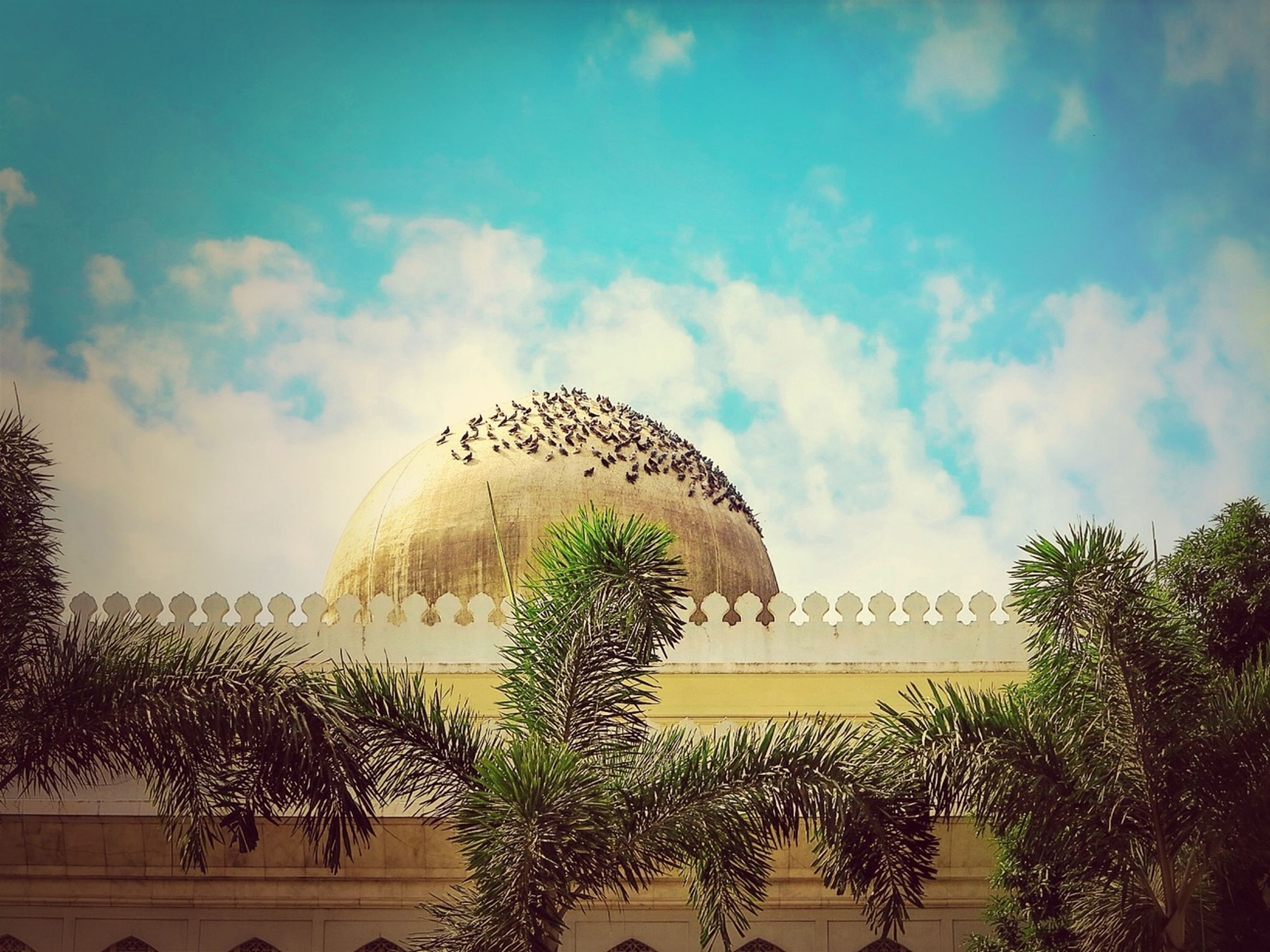 architecture, built structure, sky, tree, cloud - sky, building exterior, cloud, arch, plant, growth, cloudy, palm tree, low angle view, nature, connection, day, water, outdoors, bridge - man made structure, no people