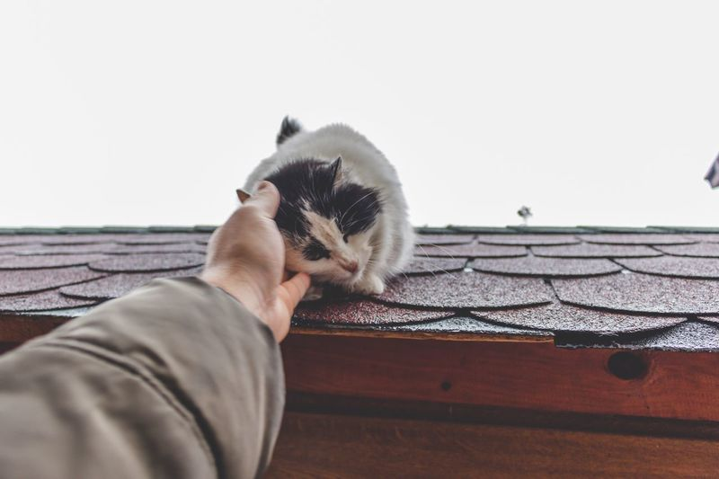Kitty One Animal Domestic Cat Domestic Animals Animal Themes Pets Mammal Human Hand Holding One Person Feline Human Body Part Outdoors Close-up Day One Man Only People