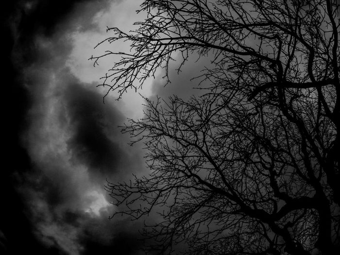 Spooky Tree // Tree EyeEm Best Shots Eye4photography  EyeEm Gallery EyeEm Selects EyeEm EyeEmBestPics Photography Photooftheday Nature Photography Day Out Action Camera ApeMan Blackandwhite Black And White Spooky Nature_collection Naturelovers Nature On Your Doorstep Low Angle View Sky Tree Branch Nature Silhouette No People Outdoors Beauty In Nature Night Thunderstorm