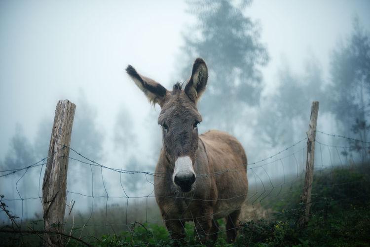 50mm Animal Animal Photography Animals Donkey Nikon D750 SPAIN