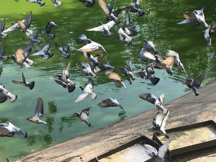 Large Group Of Animals Bird Animals In The Wild Flying Animal Wildlife High Angle View Day Flock Of Birds No People Water Outdoors Nature