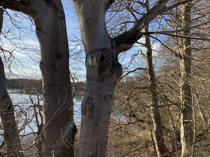 Low angle view of bare trees on field