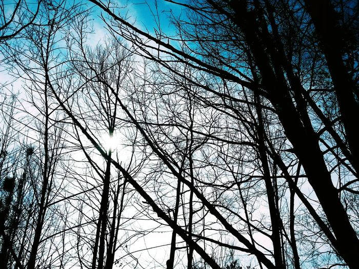 Tree Sky No People Beauty In Nature Bare Tree Low Angle View Branch Nature First Eyeem Photo