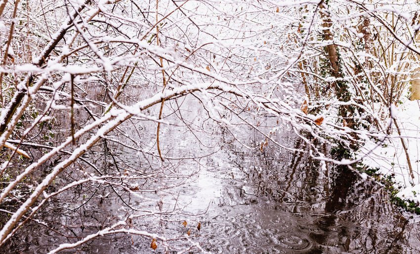 Tree Plant Branch Cold Temperature Winter Snow Bare Tree Nature No People Day Beauty In Nature Tranquility Tree Trunk Land Trunk Forest Outdoors Frozen Ice