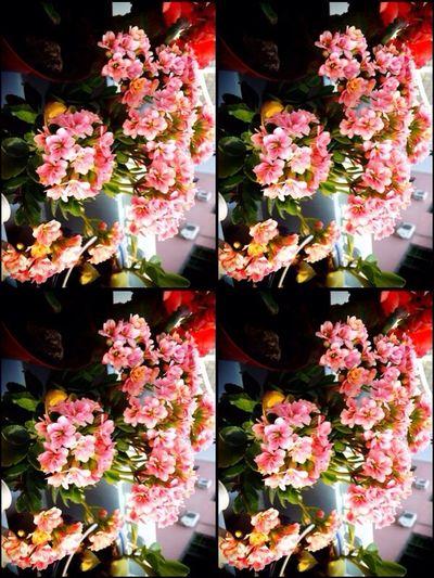 Flower Flowers Cute Beauty
