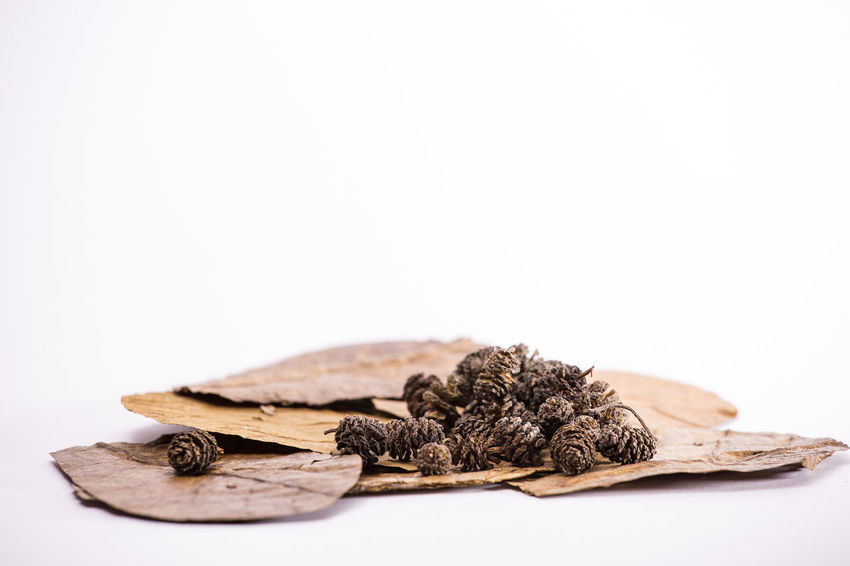 Dries Leaves for aquatic uses Dried Leaf Dried Leaves Natural Nature Close-up Copy Space Dried Plant Dry Food Freshness Leaf Leaves No People Spice Studio Shot White Background