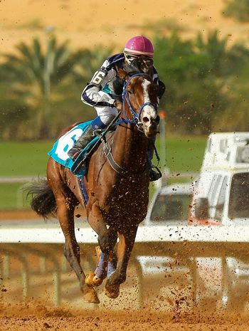Saudi Arabia USA UAE India Japan Korea INDONESIA Sports Race Water Horse Racing Gambling Competition Riding Jockey Horseback Riding Speed Horse