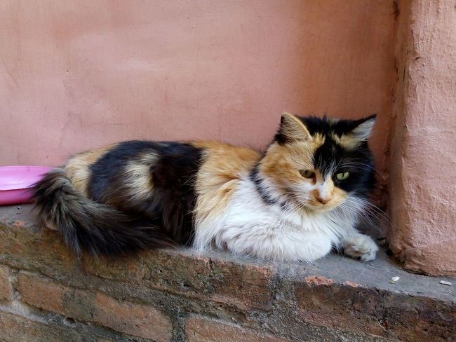 colorful cats in the yard gatos coloridos en el patio en cordoba, Argentina Cats Of EyeEm Cats 🐱 Colorful Cats Eye Cat Cat Eyes Cat Lovers Cat Photography Catlovers Cats Catsagram Catsofinstagram Cat♡ Colorful Cat Colorful Cats Gatos Gatos Coloridos Gatos 😍