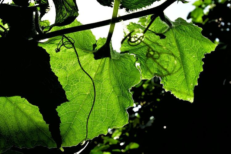 Leaf Nature Green Color Close-up Outdoors No People Day Growth Freshness Beauty In Nature