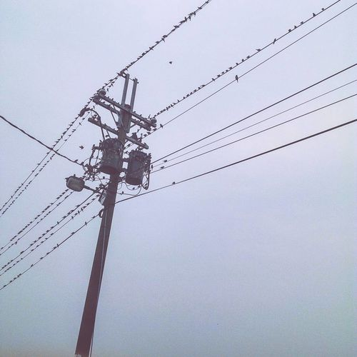 Cable Clear Sky Connection Day Electricity  Electricity Pylon Fuel And Power Generation Low Angle View Nature No People Outdoors Power Line  Power Supply Sky Technology