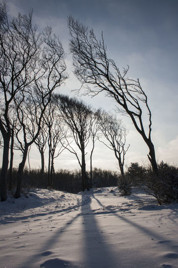 Bare Trees on Sea shore at Baltic Sea Backlight Baltic Sea Tree Bare Tree Beauty In Nature Branch Cold Cold Temperature Day Landscape Nature No People Outdoors Scenics Seaside Shadow Sky Snow Solitude Tourist Destination Tranquil Scene Tranquility Tree Tree Trunk Upright Weather Winter