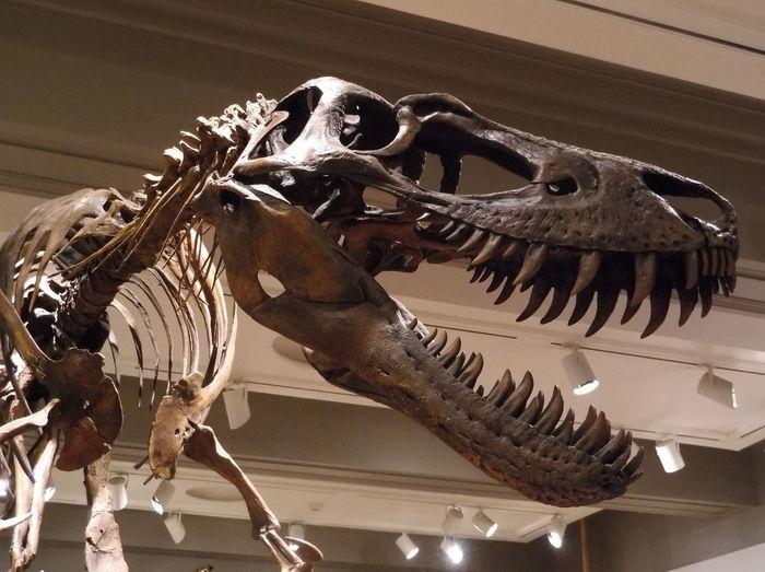 Museum History Fossil Dinosaur Ancient Extinct Animal Themes Close-up