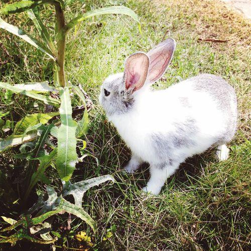 Cute Pet Hi! Rabbit 😘😘😘