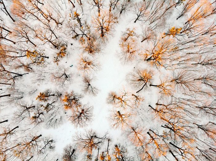 Full Frame Shot Of Trees On Snowy Field At Forest During Winter