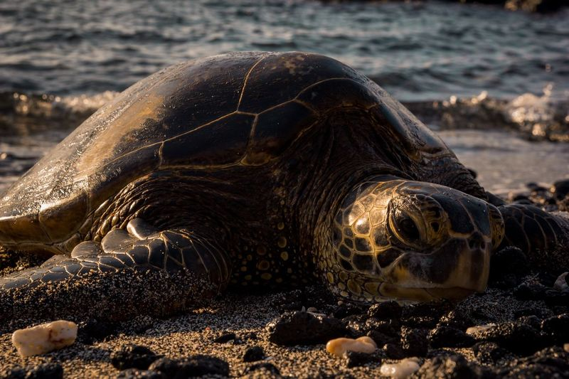Close-up of turtle at beach during sunset