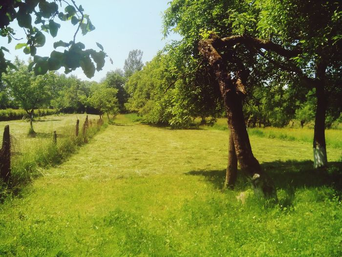 трава зеленый Green Color Green Природа сонце облака небо краса мой огород