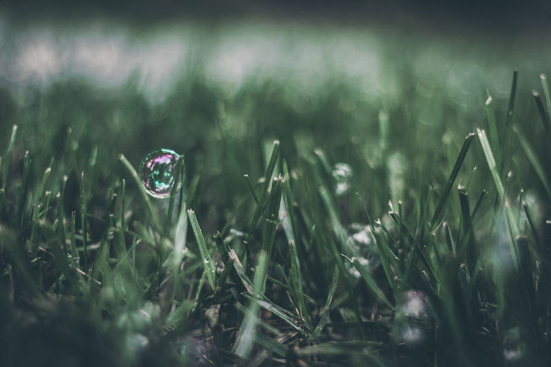 EyeEm Selects Grass Nature Growth Drop No People Outdoors Close-up Day Water Plant Fragility Freshness Beauty In Nature Flower BestofEyeEm Freshness Botanical Garden Beauty In Nature Nature Green Color Front View Bubbles Color Vibrant
