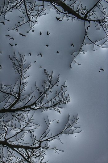 the birds of