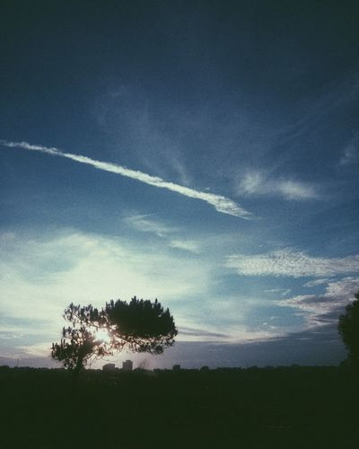 sunset in the suburbs Tree Sunset Blue Blue Sky Cloud - Sky Mobilephotography VSCO Vscocam Vscoasia Vscovisuals Vscovietnam Sky Plant Tranquility Nature Beauty In Nature Tranquil Scene Landscape No People Environment Growth Land Vapor Trail Scenics - Nature Silhouette Field Day Outdoors