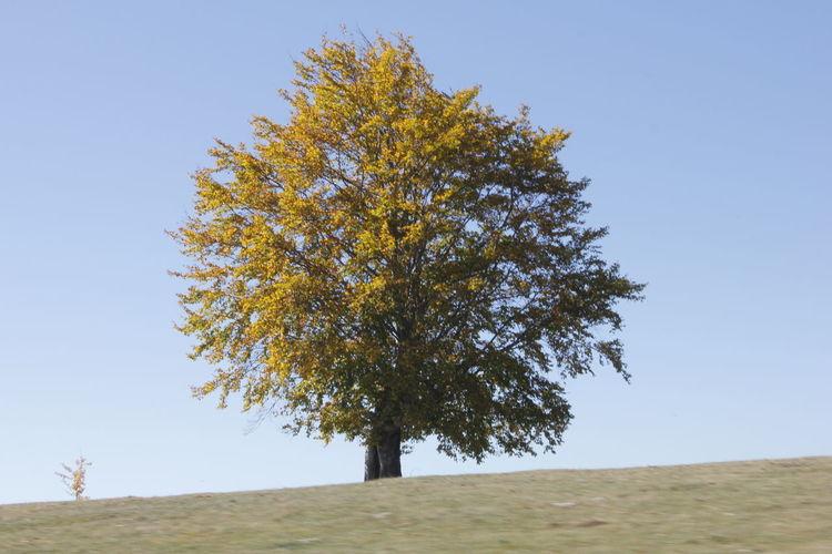 Tree Tree Sky