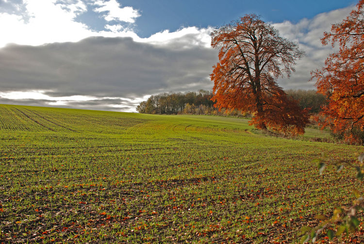 late Autumn planting Late Autumn Clouds Oak Trees Raywell UK Agriculture Autumn Beauty In Nature Cloud - Sky Day Field Fresh Planting Growth Landscape Nature No People Outdoors Ploughed Field Rural Scene Scenics Sky Tranquil Scene Tranquility Tree