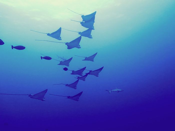 Eagleray's Divingphotography Diving Eagleray Art And Craft Blue Low Angle View Paper Sky No People Outdoors Nature