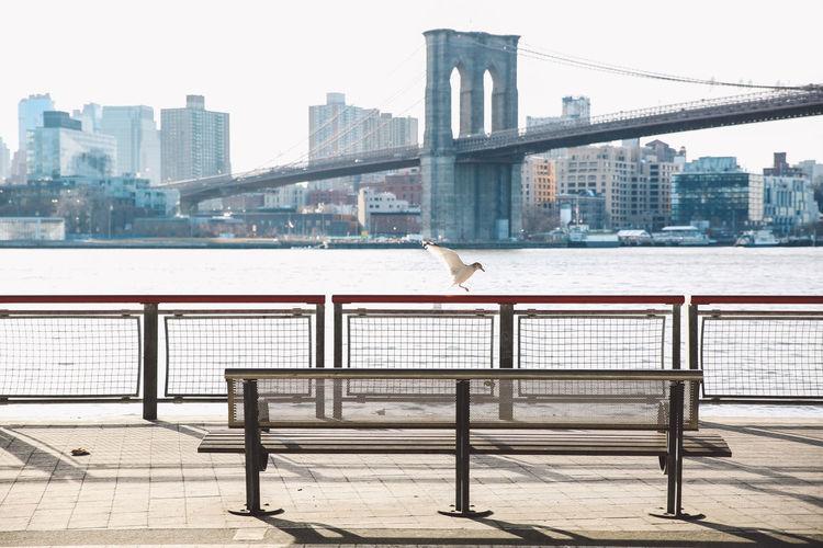 Gull landing on railing of pier against brooklyn bridge over east river