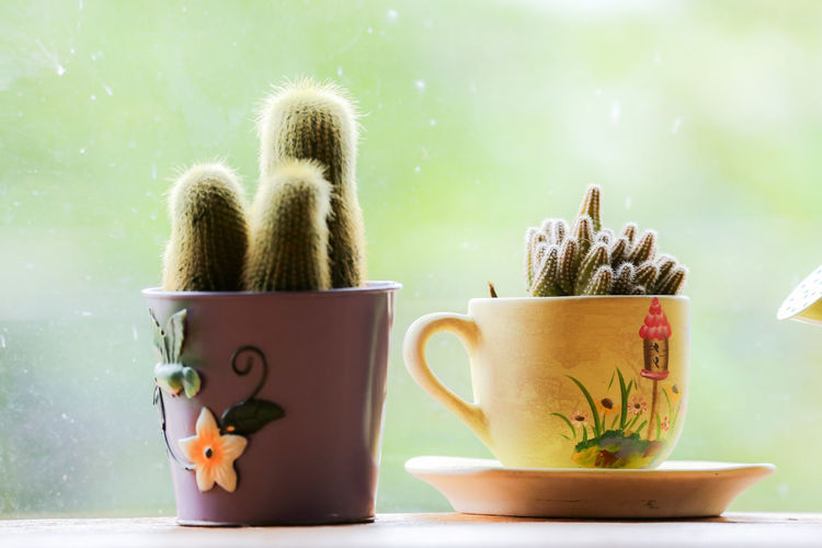 Close-up of potted plants in cups