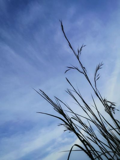Plant Sky And