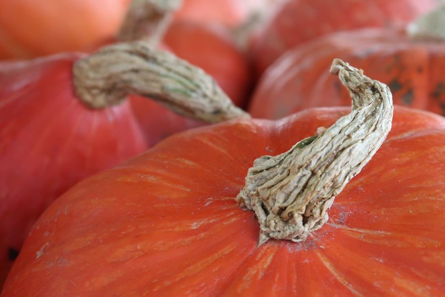 Halloween Kürbis Pumpkin Close-up Vegetable Food Food And Drink No People Red Plant Freshness Focus On Foreground Still Life Orange Color Nature Full Frame Vegetarian Food Outdoors Selective Focus Wellbeing Healthy Eating Day Tree