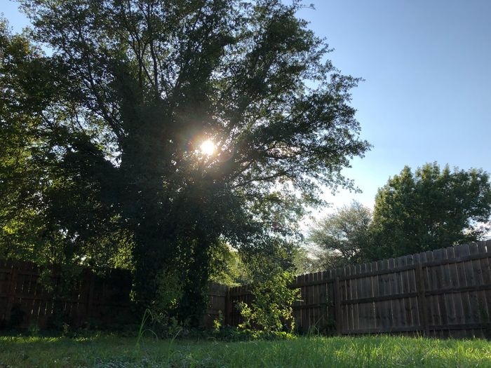 Backyard Plant Tree Sky Growth Nature Sunlight Day No People Grass Green Color Low Angle View Sun Clear Sky Tranquility