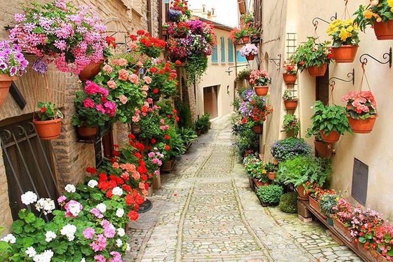 Umbria Spello Viale Street Fiori Flowers Colorate Bellissimacitta