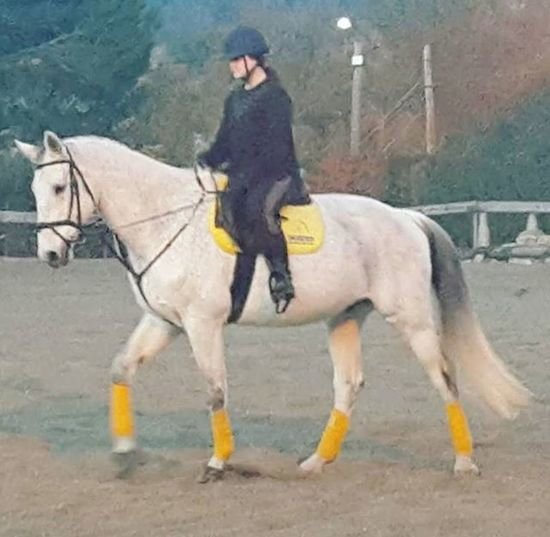 Horse Perfect BIG Bigboy Perfectcouple Perfection Equestrianlife White Tarantino Equine Funnytimes Horseadict Instahorse Horsegirl Loveyou Horsefollowers Horserider Dressage Thebest BIG
