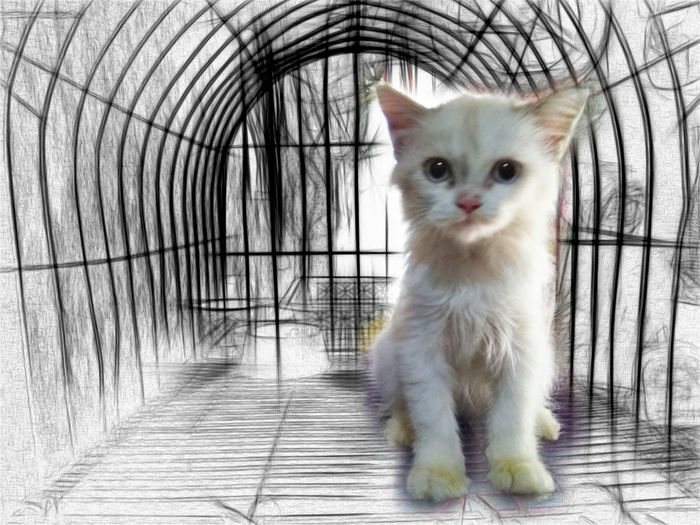 Cats Pets Kitten Feline Persian Cat