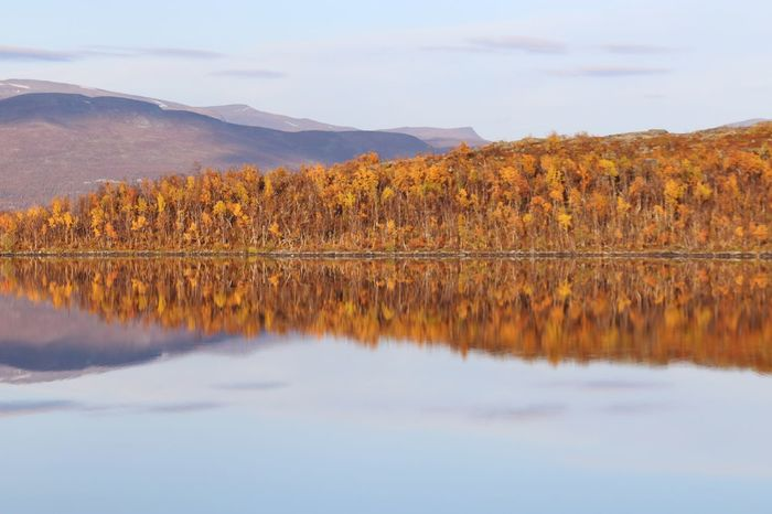 Abisko Nationalpark in Sweden Sweden-landscape Sweden Nature Fall Colors Fall Beauty Autumn Colors Autumn🍁🍁🍁 Autumn Leaves Reflection Reflections In The Water Beauty In Nature Scenics Reflection Tranquil Scene Lake Nature Tranquility Mountain Sky No People Mountain Range