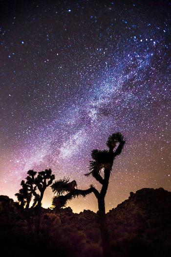 Our galaxy over a clump of joshua trees in J-Tree NP. Astronomy Beauty In Nature Dramatic Sky Galaxy Glowing Joshua Tree Joshua Tree National Park Joshua Trees Low Angle View Majestic Milky Way Milkyway Milkywaygalaxy Mystery Nature Night Outdoors Scenics Silhouette Sky Space Star Star - Space Star Field Tree