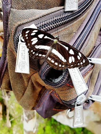 Close-up Butterfly Animal Themes Nature Colors Nature_shooters Naturelovers Nature Nature_shooters Vertical Animal Wildlife Beauty In Nature Bag